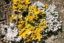 Funghi e licheni
